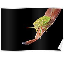 Shield Bug Poster