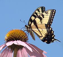 Butterfly 4 e~ by e  owen