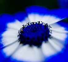 Blue Stripe by Marcus Walters