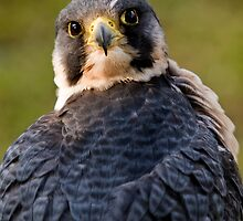 Over My Shoulder by Robert Taylor