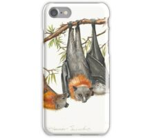 Australian Grey-headed Flying-fox iPhone Case/Skin