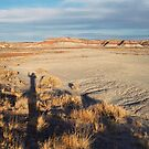 Desert Wave: Petrified Forest National Park by RocklawnArts