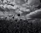 Wind songs on a storm breeze by clickinhistory