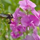 Busy Bumble by Lin Taylor