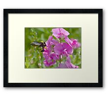 Busy Bumble Framed Print