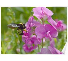 Busy Bumble Poster