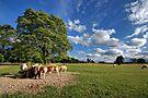 Where The Sheeps Have No Name by Yhun Suarez