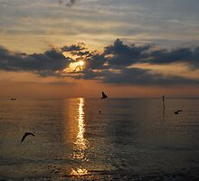 Gulls on the wing, Sunset, Hunstanton by ShroomIllusions
