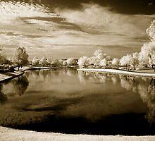 In a Dream by Sue  Cullumber