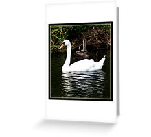 The Swan and the Ducklings Greeting Card