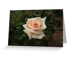 Pale Peach & Perfect Greeting Card