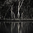 Mangrove No9 by Tim Boehm