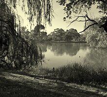 Willow Weaving Dreaming by Lozzar Landscape