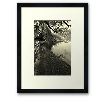Willow Weeping Framed Print