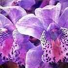 Breena's Orchids, 2003 by ArtStudio66