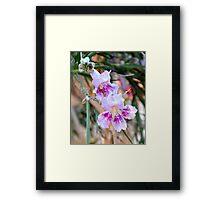 Desert Willow Flower Framed Print