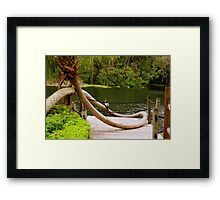 Loopy Palm at Silver Springs Framed Print