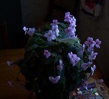 Purple by ericafaery