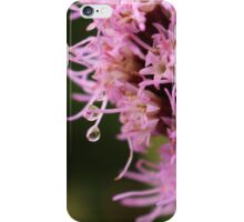 Beautiful Pink Liatris Flower with Dew Drop iPhone Case/Skin
