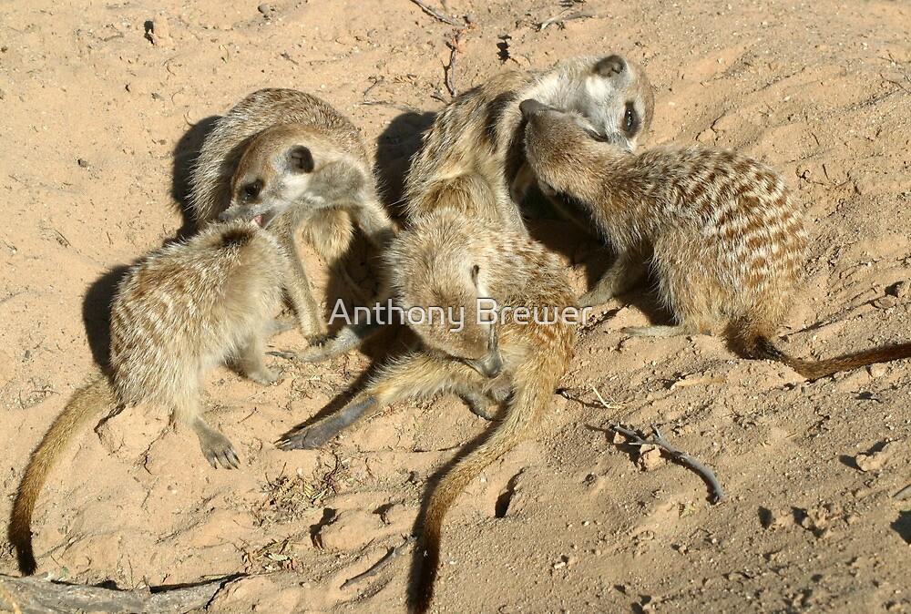 An arrangement of meerkats by Anthony Brewer