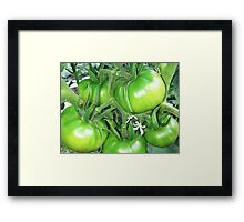 Green Tomatoes Two Framed Print