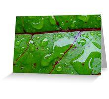 beetroot leaf Greeting Card