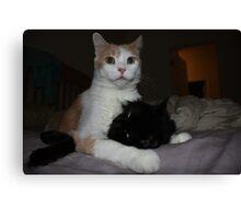 white cat licking black cat Canvas Print