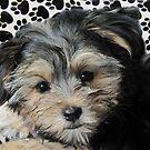 Bayle on his Blanket by Linda Miller Gesualdo