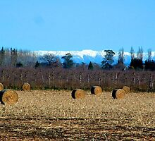HAYBALES AND SNOWY MOUNTAIN RANGE by zimmie22