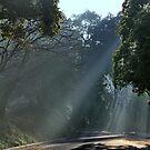 Beams of Light by jweeks