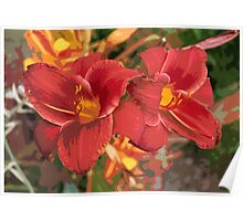 Red / pink / coral lily flower Poster