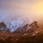Foggy Dawn, Mt Howitt, Victoria, Australia by Michael Boniwell