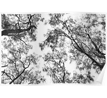 Amongst the trees Poster