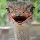 Portrait of an Ostrich by John Thurgood
