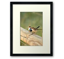 tuning the chics Framed Print