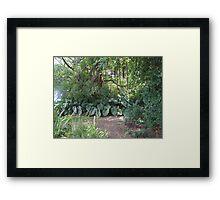 St Kitt jungle Framed Print