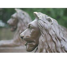 Bronze Lions Photographic Print