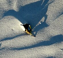 Bird in the sand by ChristinaR