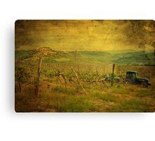 Spring in vineyard  Canvas Print