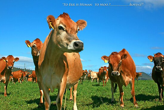 To Err is Human to Moo.........Bovine! by Kym Howard