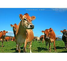 To Err is Human to Moo.........Bovine! Photographic Print