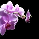The wonder of orchids by Photos - Pauline Wherrell