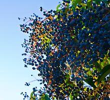 Berries by Tim Freedman