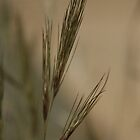 Free State grass, South Africa by Qnita