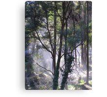 Cockatoo, Victoria (Dandenong Ranges) Canvas Print