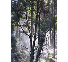 Cockatoo, Victoria (Dandenong Ranges) Photographic Print