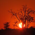 Sunset. Moremi Game Reserve, Botswana, Africa by Adrian Paul