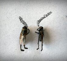 Stoneflies by Susan Littlefield