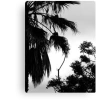 Tree DCLXXX Canvas Print