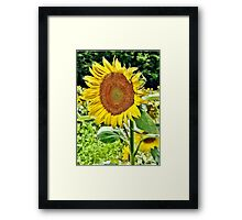 Turn Your Face to the Sun Framed Print